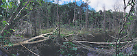 Deforestation in the Atlantic rainforest, environmental degradation, rainforest clearance.