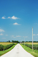 A middle america road between two corn fields parallel to power lines.