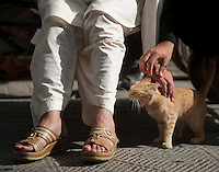 An unappreciative cat is petted by Afghan merchants in Dubai.
