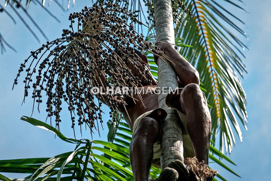 Colheita de Açai em Abaetetuba Para. 2010. Foto de Ubirajara Machado.