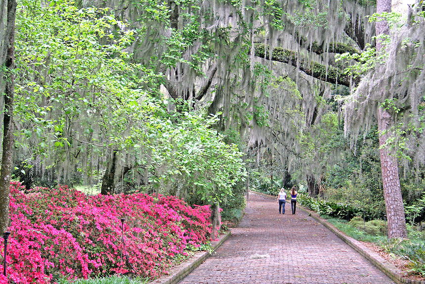 Azalea flowering women walking in oak trees at Alfred Maclay Gardens State Park Tallahassee Florida