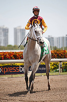 Awesome Maria ridden by John Velazquez after winning the Rampart Stakes (G3). Gulfstream Park Hallandale Beach Florida. 03-31-2012 Arron Haggart / Eclipse Sportswire