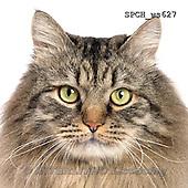 Xavier, ANIMALS, REALISTISCHE TIERE, ANIMALES REALISTICOS, FONDLESS, photos+++++,SPCHWS627,#A#
