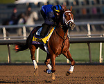 October 29, 2019 : Breeders' Cup Classic entrant Vino Rosso, trained by Todd A. Pletcher, exercises in preparation for the Breeders' Cup World Championships at Santa Anita Park in Arcadia, California on October 29, 2019. Carolyn Simancik/Eclipse Sportswire/Breeders' Cup/CSM