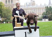 Westminster Dog of the Year Show