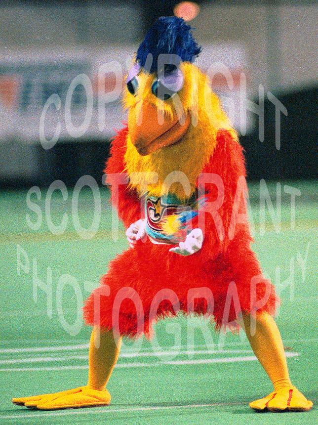 Ottawa Rough Riders mascot 1988. Photo John Bradley