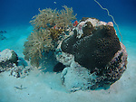 German Channel, Palau -- Rock and coral on sandy bottom.