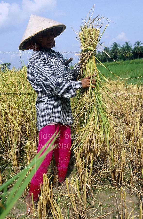 CAMBODIA Kampot, rice farming with SRI method System of rice intensification, woman with sickle at hand harvest / KAMBODSCHA Kampot, Reisanbau nach SRI System zur Reisintensivierung, Frau bei Reisernte per Hand mit Sichel