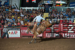 Logan Daniel attempts 748 of Stockyards Pro Rodeo during first round of the Fort Worth Stockyards Pro Rodeo event in Fort Worth, TX - 8.10.2019 Photo by Christopher Thompson