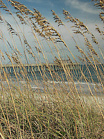 Sea oats, beach & pier