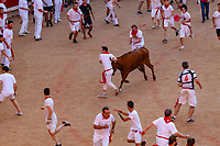 Europe,Spain,Pamplona,San Firmin festival 2018, Encierro, Once the bulls run into the square, it is when the heifers are released in the ring, small brave cows are in fight with the runners