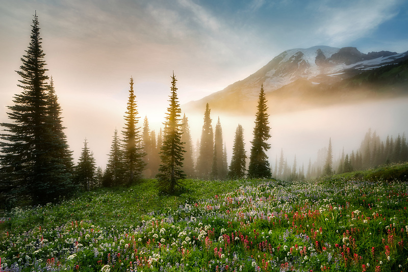 Sunset, fog and wildflowers. Mt. Rainier National Park, Washington