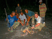 scientist with local police standing next to nesting hawksbill sea turtle, Eretmochelys imbricata, Dominica, Caribbean, Atlantic