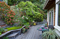 Hillside cottage garden with drought tolerant flowering shrubs and perennials in backyard with deck; Diana Magor Garden