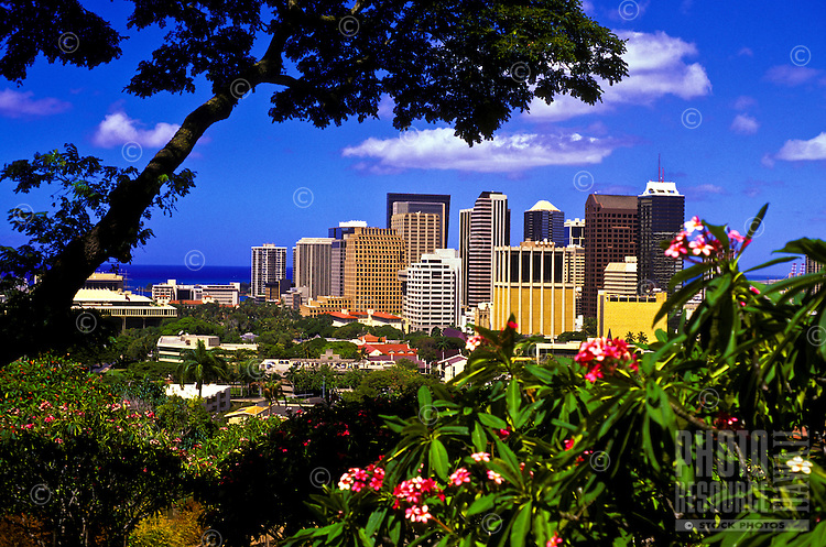 Downtown Honolulu framed by plumeria blossoms