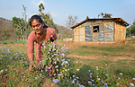 Maya Thapalyia picks plants for her livestock to eat in front of a transitional house built for her family in Majhitar, Nepal, by Dan Church Aid, a member of the ACT Alliance. Her family's home collapsed completely in an April 2015 earthquake that ravaged Nepal.