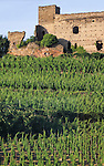 VMI Vincentian Heritage Tour: Grape vine fields outside Lyon France Monday, June 27, 2016. (DePaul University/Jamie Moncrief)