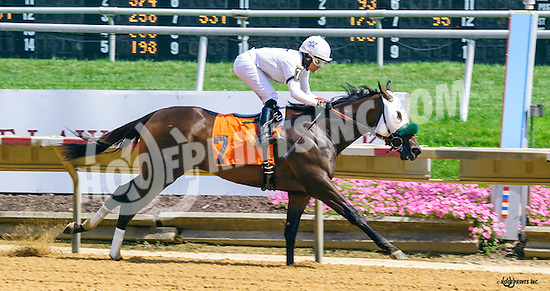 Spirituality winning at Delaware Park on 8/4/16