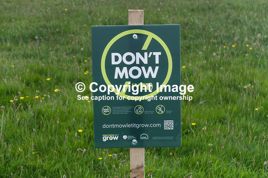 Don&rsquo;t Mow, Let it Grow, Public Notices on Ramore Head, Portrush, Co Antrim, N Ireland. Erected by Causeway Coast &amp; Glens Borough Council, June, 2017, 201706173576<br /> <br /> Copyright Image from Victor Patterson,<br /> 54 Dorchester Park, <br /> Belfast, UK, BT9 6RJ<br /> <br /> t1: +44 28 9066 1296 (from Rep of Ireland 048 9066 1296)<br /> t2: +44 28 9002 2446 (from Rep of Ireland 048 9002 2446)<br /> <br /> m: +44 7802 353836<br /> <br /> e: victorpatterson@me.com<br /> www.victorpatterson.com<br /> <br /> Please see my Terms and Conditions of Use at www.victorpatterson.com. It is IMPORTANT that you familiarise yourself with them.<br /> <br /> Images used on the Internet must be visibly watermarked i.e. &copy; Victor Patterson<br /> within the body of the image and copyright metadata must not be deleted. Images <br /> used on the Internet have a size restriction of 4kbs and will be chargeable at current<br />  NUJ rates unless agreed otherwise.<br /> <br /> This image is only available for the use of the download recipient i.e. television station, newspaper, magazine, book publisher, etc, and must not be passed on to any third <br /> party. It is also downloaded on condition that each and every usage is notified within 7 days to victorpatterson@me.com<br /> <br /> The right of Victor Patterson to be identified as the author is asserted in accordance with The Copyright Designs And Patents Act (1988). All moral rights are asserted.