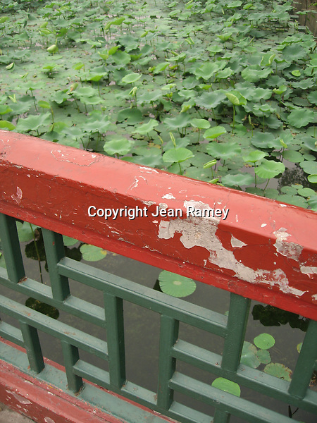 Lily pads at the Summer Palace, Beijing, China