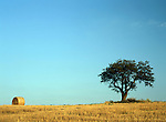 Hay Bale and Tree in Field against Blue Sky