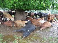 15/06/09 Dead Cows