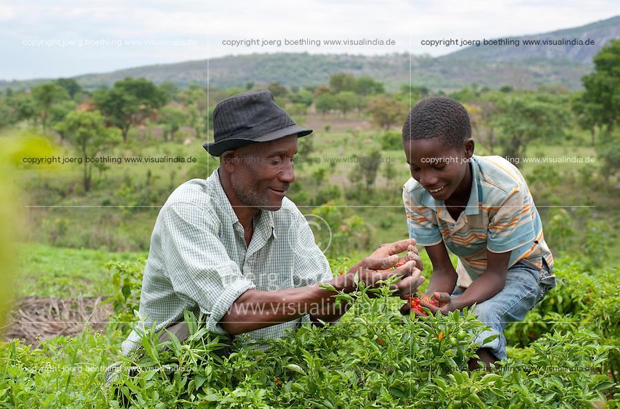 ANGOLA Kwanza Sul farmer and son in chillies field / ANGOLA Kwanza Sul, laendliches Entwicklungsprojekt  ACM-KS, Dorf Sao Pedro, Farmer Virgilio Nguli 56 mit seinem Sohn, er wurde von ACM im Gemueseanbau beraten, um zusaetzliches Einkommen zu erzielen, Chillies Ernte