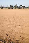 Sandy soil in fields following a strong storm, Suffolk Sandlings at Alderton, Suffolk, England