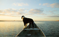 Scout dog in row boat.