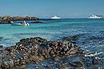 Galapagos News