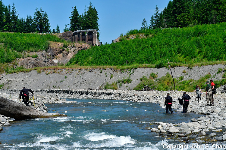 Team of National Park Service Fisheries scientists drift netting Upper Elwha River (formerly lakebed of Lake Mills), above remnants of former Glines Canyon Dam. Olympic National Park, Washington State
