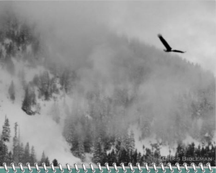 2015 Calendar - Birds of a Feather with photography by Chris Bidleman.<br /> Black and white of a bald eagle is in flight with wings spread over snow covered mountains and trees with fog rolling across the valley.
