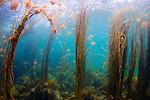 Productive shallow water environments