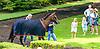 Guilty Twelve before The Robert G. Dick Memorial Stakes (gr 3) at Delaware Park on 7/8/17