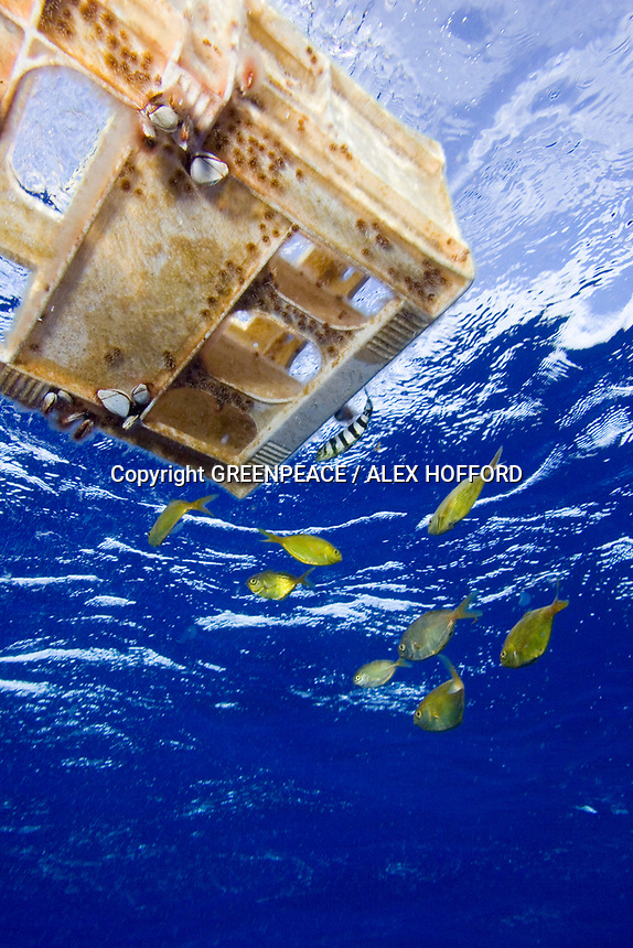 20061031 INTERNATIONAL WATERS : CENTRAL NORTH PACIFIC OCEAN  Fish swim next to an abandoned Japanese crate found in the high seas of the Central North Pacific Ocean 31st October 2006. Greenpeace are highlighting the threat that plastic poses to the world's oceans.<br /> ALEX HOFFORD