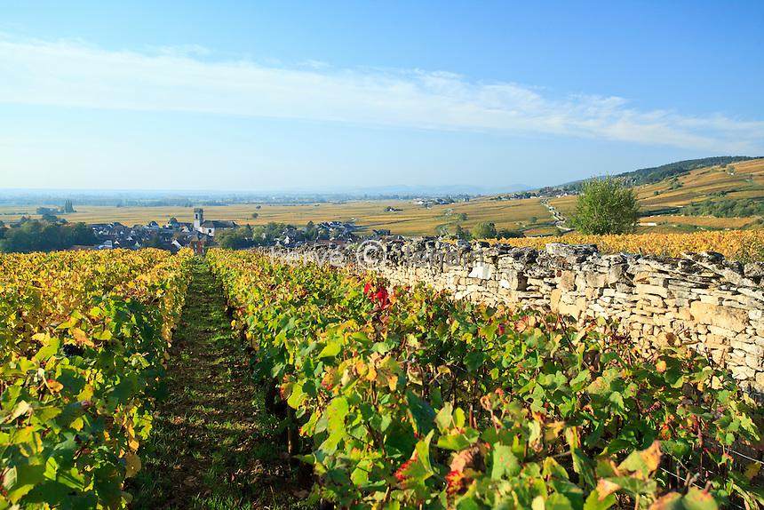 France, Côte d'Or (21), Route des Grands Crus, Pommard, vignoble Côte de Beaune, vignes et village en automne // France, Cote d'Or, Route des Grands Crus, Pommard, Cote de Beaune vineyard, vines and village in autumn