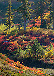 Mount Baker-Snoqualmie National Forest, Washington<br /> Fall colors in an alpine setting at Heather Meadows