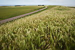 Dike at the Dutch island of Texel