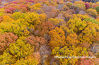 63876-02319 Aerial view of fall color trees Stephen A. Forbes State Park Marion Co. IL