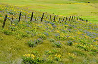 Wildflowers and fence, Columbia Hills State Park, Wahington