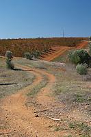 winding vineyard dirt road herdade do peso alentejo portugal