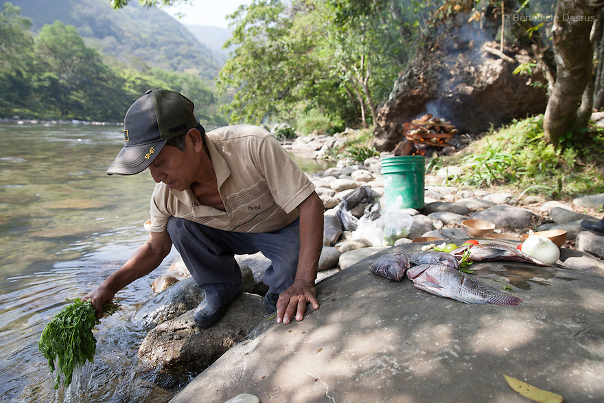 Don Victor Santiago Olivares washes the epazote that is used to season caldo de piedra in the Usila River in San Felipe Usila, Mexico on March 30, 2016. Caldo de piedra, or stone soup, is an ancestral dish of the indigenous Chinantec people of San Felipe Usila, a remote village in northern Oaxaca state, Mexico. Traditionally prepared by men in a ritual that dates back to pre-Hispanic times, the soup is cooked in jícara (gourds) by glowing-hot white river rocks that have been heated on a bonfire of orangewood. Ingredients include whole mojarra fish, tomatoes, onion, garlic, chile, epazote, cilantro and fresh water; the soup is seasoned with lime and salt and eaten on the banks of the Usila river. Photo by Bénédicte Desrus