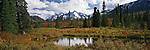 Denali rises over the trees and pond in a wild Alaskan panoramic in Denali National Park, Alaska.