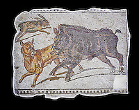 First half of the 3rd century AD Roman mosaic depiction  a wild boar and hare hunt. From Hadrumetum (Sousse), Tunisia.  The Bardo Museum, Tunis, Tunisia. black background