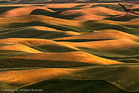 Elevated view of rolling hills of wheat at sunrise, from Steptoe Butte, Palouse region of eastern Washington.