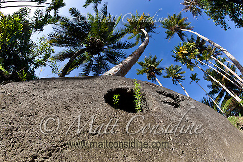 Looking up at some Yap stone money and the coconut palms against a bright blue sky, Yap Micronesia. (Photo by Matt Considine - Images of Asia Collection) (Matt Considine)