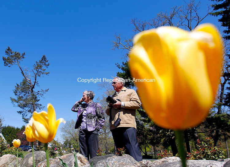 """Waterbury, CT-29 April 2012-042912CM02-  Mary McMahon of Waterbury and her brother in-law Tom McMahon of Pompano Beach FL, stop to enjoy tulips during the second annual Waterbury Tulip and Flower Festival Sunday morning at Fulton Park.  Event Director, Dominic Rinaldi said he expects 400-500 people this year, more than last year.  Rinaldi said he has a vision for Fulton Park to resemble the Keukenhof gardens, a renown park in Holland.  Rinaldi said with the collective effort of the Historic Overlook Community Club, who has been spearheading a cleanup effort, he hopes reach that vision.  Rinaldi said the park would look """"majestic"""".      Christopher Massa Republican-American"""