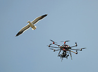 A seagull checks out Skysport's drone remote camera during day one of the 2nd cricket test match between the New Zealand Black Caps and Sri Lanka at the Hawkins Basin Reserve, Wellington, New Zealand on Saturday, 3 February 2015. Photo: Dave Lintott / lintottphoto.co.nz