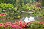 Seattle, WA: Orange and fuschia azaleas bloom in spring from the upper hillside overlooking the lake of the Japanese Garden in Washington Park Arboretum