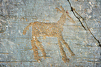Prehistoric petroglyph rock carvings of a deer carved by the Camunni people in the iron age between 1000-1600 BC, from Rock 32 of  National Park of Naquane, Lombardy, Italy